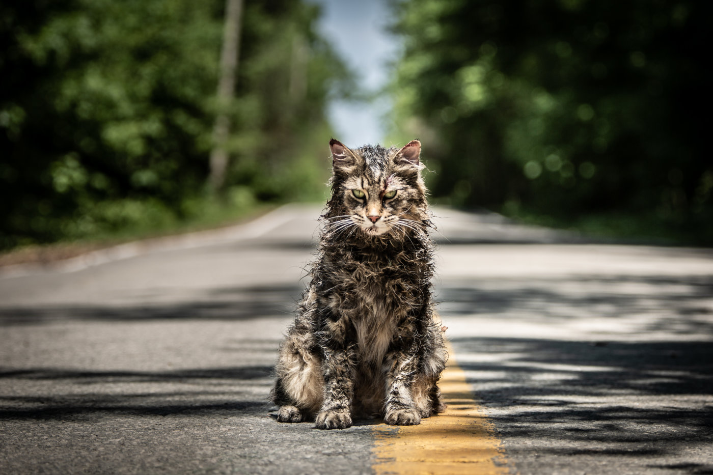 Movie Review: Pet Sematary (2019)